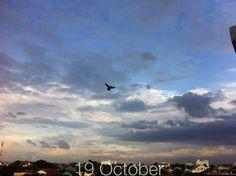 HBD 19 Oct. 14 #sky #bird