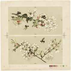 File:Apple-Blossoms and Bees Cherry Blossoms and Bees (Boston Public Library).jpg