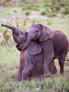 Happy elephant babies