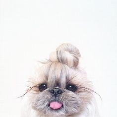 style #dog