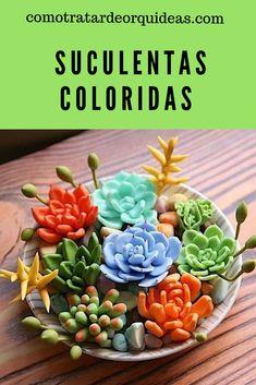 Succulent Arrangements, Cacti And Succulents, Planting Succulents, Succulent Gardening, Garden Pots, Container Gardening, Indoor Water Garden, Indoor Plants, Terrarium Plants
