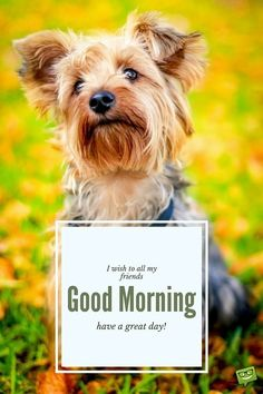I wish to all my friends Good Morning, have a great day!