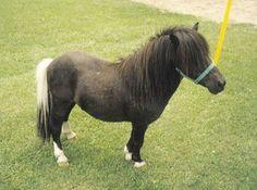 poni - Yahoo Kuvanhakutulokset Mini Pony, Ponies, Pony