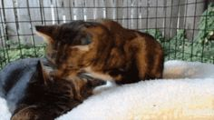 2 Feral Cats Reunited and Wouldn't Let Go of Each Other, Here's Their Love Story Lots Of Cats, Feral Cats, Letting Go, Love Story, Let It Be, Animals, Animales, Animaux, Lets Go