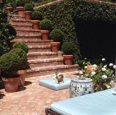 Beautiful. .potted plants on steps up stairs.