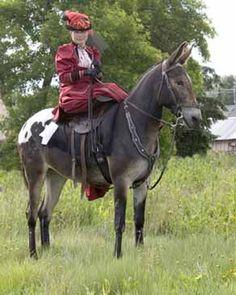 Sidesaddle on an Appaloosa mule!