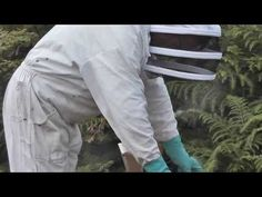 Apiculture Ouessant (Sept 2013) - YouTube