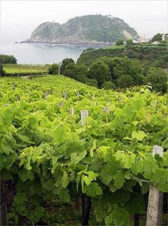 Txakoli-rezabal Pais Vasco Basque Food, Wine Vineyards, Across The Universe, Basque Country, The Good Place, Things To Do, Spain, Europe, Earth