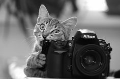 Photography Tips for the Snap-Happy http://vocaladymagazine.com/2015/10/06/photography-tips-for-the-snap-happy/