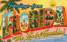 Zoom Wear: Greetings from Florida I Rectangle Magnet: Greetings from Florida FL vintage postcard design t-shirts gifts. Vintage Greetings from Florida FL art tshirt tshirts for those from Florida FL & love Florida FL Vintage Florida, Old Florida, Florida Girl, Florida Living, Florida Style, Florida Vacation, Central Florida, Florida Keys, Orlando Florida