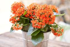 Your Guide to Growing Kalanchoe Plants Indoors