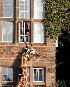 Spring break getaways: Giraffe Manor, Nairobi, Kenya