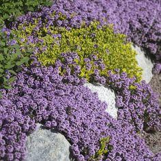 Outdoor Gardens, Terrace, Summertime, Home And Garden, Herbs, Flowers, Green, Plants, Gardening