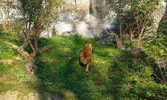 Lwiątko. #lew, #PantheraLeo