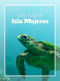 Plan the perfect Day Trip to Isla Mujeres with our help.