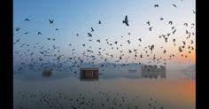 """Ravikanth Kurma fez esta foto do nascer do sol em Jal Mahal (Palácio da Água), no lago Man Sagar, em Jaipur. 'Não são muitos turistas que visitam o lugar de madrugada, então está é calmo de manhã cedo', disse Kurma. """"Os moradores visitam o lago de manhã e alimentam pombos e peixes"""""""