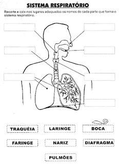 Pedagógiccos: Atividades sobre o Corpo Humano - parte 1                                                                                                                                                                                 Más