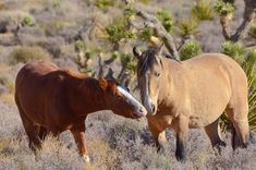 137 vind-ik-leuks, 23 reacties - Eric Wright (@desert.fish) op Instagram: 'A little father, son time in the desert just outside Las Vegas. My favorite lead stallion Hannibal…'