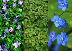 Gifts For The Outdoor Enthusiastics Shade Garden, Garden Plants, Garden Gadgets, David Austin Roses, Colorful Garden, Blogger Themes, Garden Inspiration, Gardening Tips, Garden Design