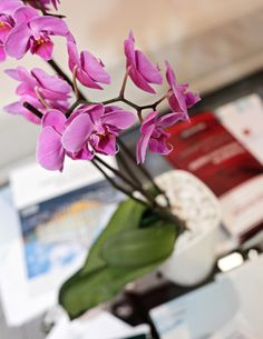 Flower it's not Grenades, but also beautiful... #gc_granat