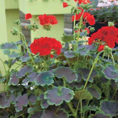 Park Seed is a one stop shopping source for all types of gardening and seeds needs. Customers can request a free newsletter as well as a free catalog through its official website. Reviews reveal that customers like Park Seed because of its great variety of seeds and supplies.