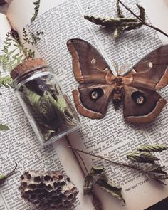 green witchcraft ofmothandmoon:Wild Harvested Blackberry leaves and branches have been traditionally used for protection of the home Green Witchcraft, Vegvisir, Witch Aesthetic, Book Of Shadows, Goblin, Wiccan, Crystals, Green Fairy, Inspiration