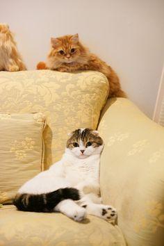 里親さんブログ安心したにゃ〜 - http://iyaiya.jp/cat/archives/73155