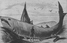 Picture of a Basking Shark? From Harper's Weekly, October 24, 1868