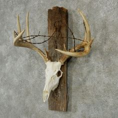 Whitetail Skull & Antlers For Sale #13210 - The Taxidermy Store