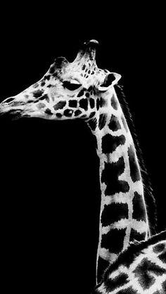 Dark Simple Giraffe Animal  #iPhone #5s #wallpaper