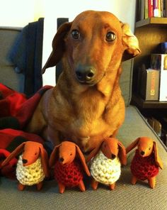 Sian shop on Etsy makes these adorable dachshunds wearing cute little sweaters
