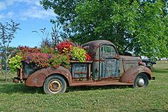 so we actually have an old rusted truck out at the edge of our woods just sitting there from the original owners of the property & since we own a trucking company what a clever use to plant with flowers!!!