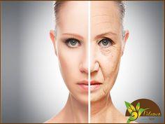 EL MEJOR SPA. ¿Tu rostro se ve cansado? En Velamen SPA podemos ayudarte con nuestro tratamiento de Foto Rejuvenecimiento Facial, el cual es ideal para pieles maduras y en donde gracias a la tecnología que usamos ayudamos a regenerar desde las capas profundas de la piel provocando un alisamiento en las líneas de expresión, reafirmando la piel, re-activando el colágeno y elastina natural y retardando los signos de envejecimiento. Te invitamos a comunicarte al teléfono 5562-6264, o a través de…