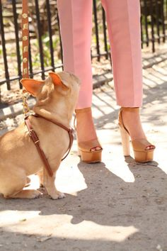These cropped pink pants and tan platforms are awesome! The puppy makes it look better