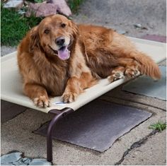 Pharaoh wants this for the patio. COOLAROO DOG BEDS
