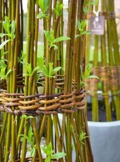 living willow with woven bindings