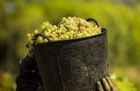 Wine experience trips | Articles |