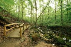 This One Easy Hike In Georgia Will Lead You Someplace Unforgettable Hiking Places, Hiking Trails, Camping In Georgia, Waterfall Trail, Spring Nature, Get Outdoors, Outdoor Fun, Garden Bridge, Natural Beauty