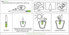 Des crayons qui deviennt des plantes. Parfait pour les cadeaux d'entreprise !