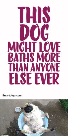 This Dog Might Love Baths More Than Anyone Else, Ever!