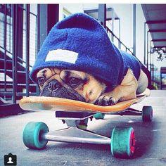 Skater retired from all that skating./# Chubster
