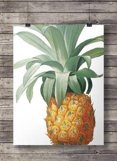Jahrgang Ananas botanische Illustration - Printable Wandkunst - sofort-Download-Digitaldruck