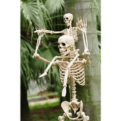 Crazy Bonez and Crazy Bonez Jr. - Real Time - Diet, Exercise, Fitness, Finance You for Healthy articles ideas Halloween Outside, Creepy Halloween, Outdoor Halloween, Halloween Skull, Halloween 2020, Holidays Halloween, Vintage Halloween, Halloween Nails, Halloween Party