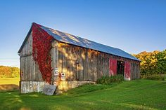 Ontario Barn 4. An autumn barn in southern Ontario with some fine red foliage for decoration.