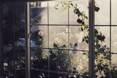 Roses Flower Yellow, White Flowers, Colorful Roses, Maleficarum, Through The Window, Light And Shadow, Writing Inspiration, Storyboard, Greenery