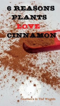 cinnamon in gardening (this says you can use cinnamon in place of root hormone powder-- hmm)