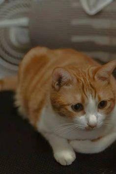 #cat #cuteness Share My Life, Cats, Animals, Gatos, Animales, Animaux, Animal, Cat, Animais