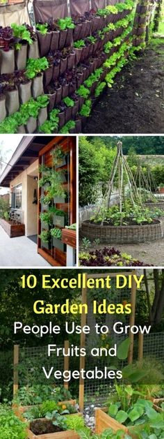 10 Excellent DIY Garden Ideas People Use to Grow Fruits and Vegetables Containers have a lot of advantages: they're portable, cheap, and can be placed in awkward places, from yards to fire escapes to roofs. Organic Gardening, Diy Garden, Growing Fruit, Organic Vegetable Garden, Plants, Garden, Container Gardening, Indoor Plants, Gardening Tips