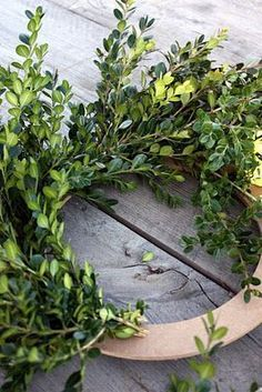 How to make a boxwood wreath. I looked all over for these last Christmas - and again at Easter - now I will make the mini-version my self - tie with ribbon and hang down from top of cabinet door.
