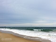 12/13/16: Birds fishing in Nags Head, Outer Banks. High 55°, Ocean 52